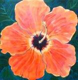 Hibiscus Acrylic on Canvas
