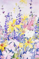 Santa Barbara Wildflowers II