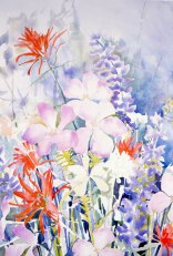 Santa Barbara Wildflowers